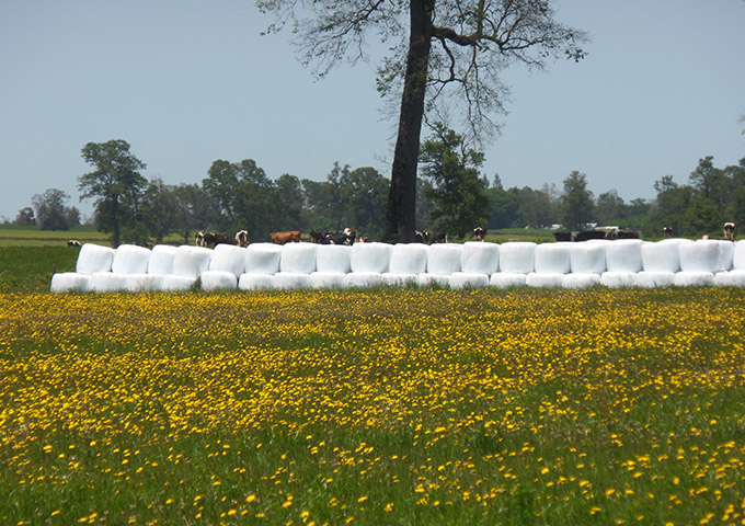 Silage Film, Wingrass,