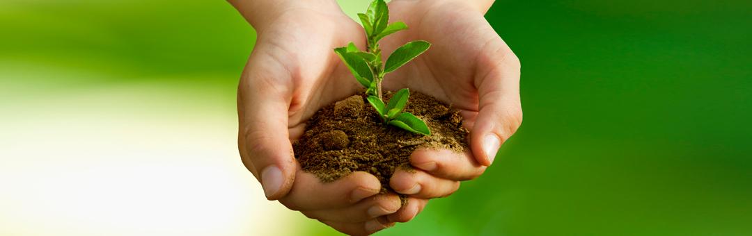 Sustentabilidad-image
